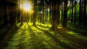 Många svenska skogsföretag saknar digitaliseringsstrategi