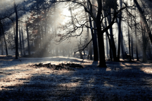 B3 hjälper Skogsstyrelsen att kartlägga skador på skogen genom AI 3
