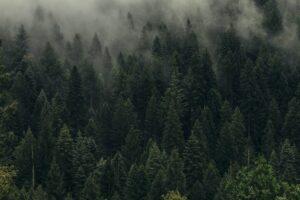 Övergång till molnbaserade tjänster kan minska koldioxidutsläppen med 60 miljoner ton per år 3